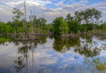 Beautiful forest reflecting on calm lake shore at Beting Basah,Bagan Datoh Perak, Malaysia