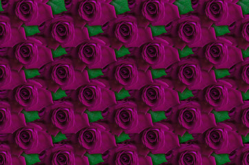 Background of purple roses with leaf lying closely beside