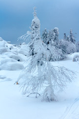 trees covered with snow on a mountain top