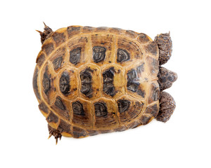 Shell of Tortoise - Overhead View