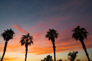 Palm Treee West Coast Tropical California Sunset