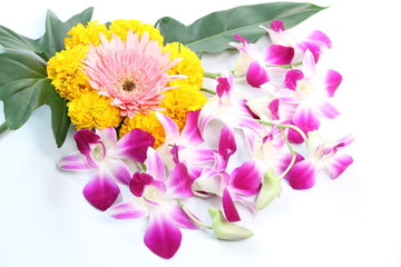 Many species of colorful flowers on a white background.