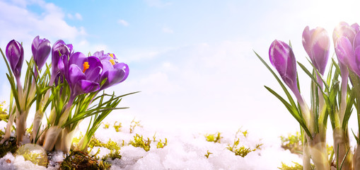 Fototapete - art spring flower  background
