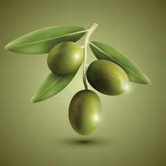 Green olive branches on a green background, vector illustration.