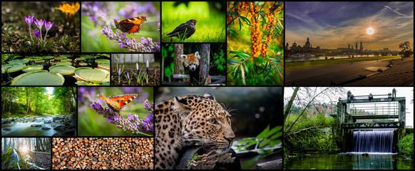 Collage: Mensch und Natur