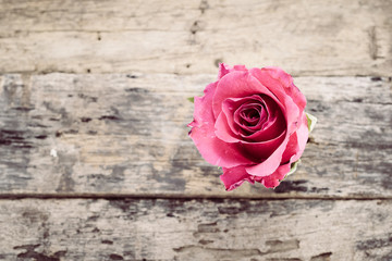 Rose on the old wooden floor
