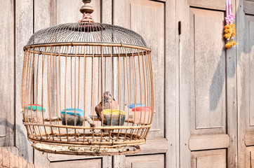 Vintage color filter, Bird in a vintage birdcage in a front from wooden door