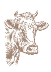 Drawing of cow head