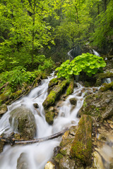 Waterfall in a lush gorge in Slovenský Raj, Slovakia