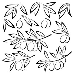 Set Olive Branches, Berries and Leaves Monochrome Black Pictograms Isolated on White Background. Vector