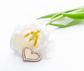 Fresh tulip flower and decorative heart from wood. St. Valentines or love concept. On the white.
