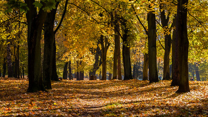Fototapeta Park Zwierzyniecki Białystok