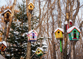 beautiful bright colorful birdhouses hang on trees