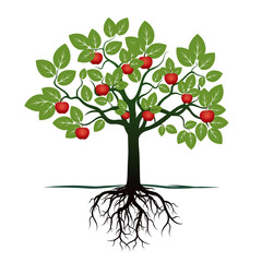 Young Tree with Green Leafs, Roots and Red Apples. Vector Illustration