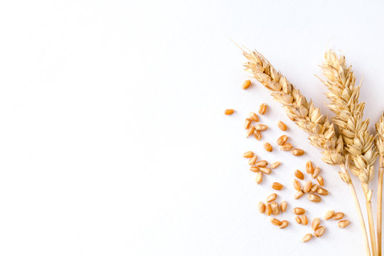 Golden ripe wheat on white background