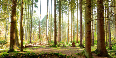 Wald Panorama in Morgensonne