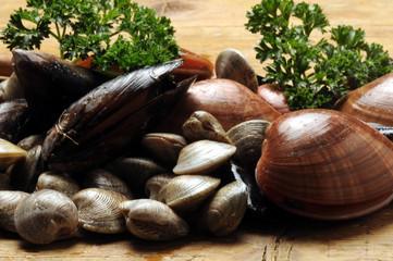 Callista chione Mytilus galloprovincialis ムラサキイガイصدف سیاه مدیترانه Черноморская мидия 地中海貽貝 Fasolari Smooth vongole clams صدف هموار
