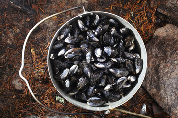 collect and prepare mussels