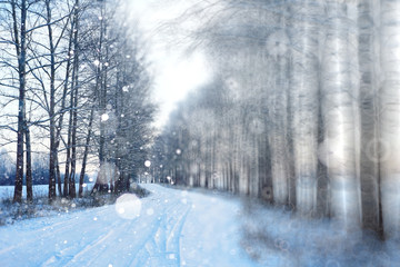 blurred background winter forest snowfall