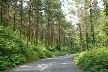 carretera curva país vasco 5204-f16