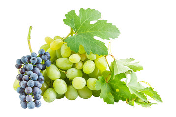 Ripe blue and green grapes