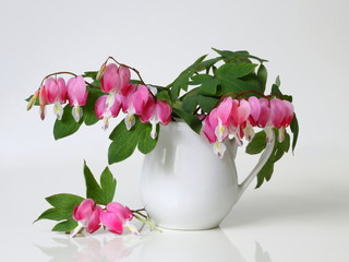 Bouquet of pink bleeding heart flowers in a vase on a white background. Romantic floral still life with pink flowers.