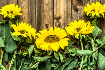 Sunflowers on rustic wooden boards. Flowers backgrounds with copyspace