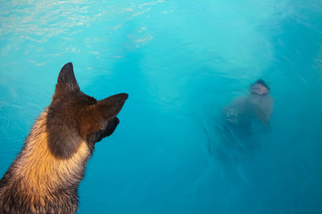 Dog watching person in swimming pool