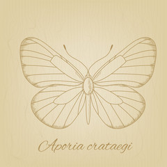Vector sketch of a butterfly on the background texture of the old paper