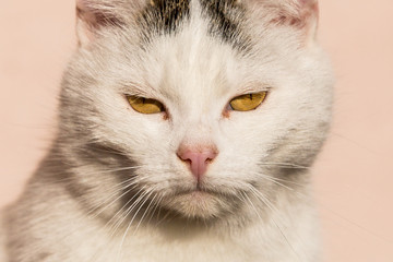 White cat closeup