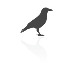 Crow (Raven) vector silhouette icon