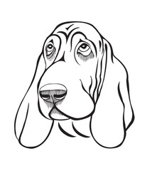 Dog breed basset head