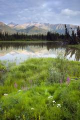 Alaska Wilderness Wildflowers