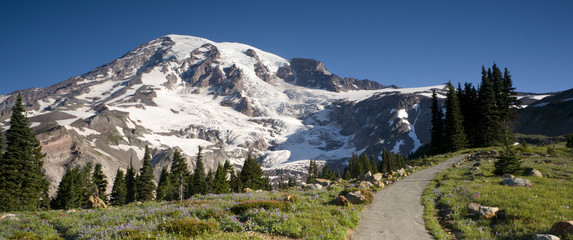 Trail Leads to Paradise on Mount Rainier Panorama
