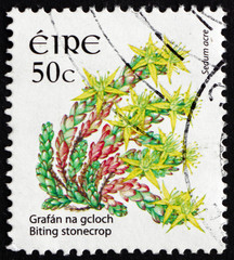 Postage stamp Ireland 2008 Biting Stonecrop, Flowering Plant