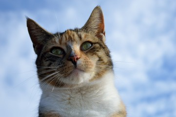Close up of a calico cat