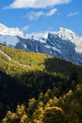 Pine trees in autumn