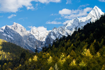 Mountain with snow and pine forest