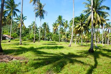 Wall Mural - Palm trees on an island