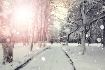 sidewalk winter trees branches
