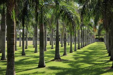 alignement de cocotiers dans parc de Higuey
