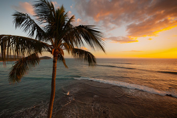 Aerial view of palm tree at sunset golden hour, overlooking the horizon