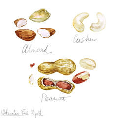 Watercolor Food Clipart - Nuts