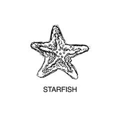 Starfish vector sketch
