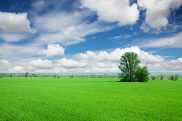 Green grass field and blue sky with clouds