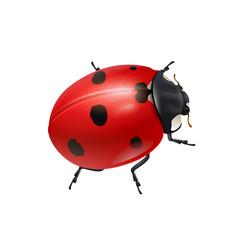 Realistic shiny ladybug.