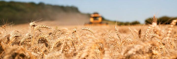 Récolte du blé , moissonneuse jaune