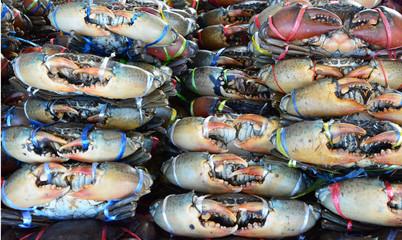 Crucifix Crab , Charybdis  , Crucifix swimming crab , Flower crab, Blue crab, Blue swimmer crab, Blue manna crab, Sand crab, Portunus pelagicus,