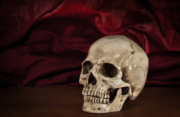 Still life white human skull on wooden table