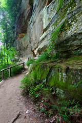 Wall Mural - Hiking trail along a cliff of Turkey Run State Park in Indiana